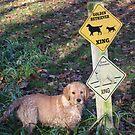 """Lady """" Dog Crossing"""" Hmmmm by goldnzrule"""