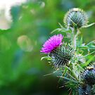 Scottish Thistle by TheCroc1979