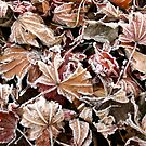 Autumn Frost by Mary Fox