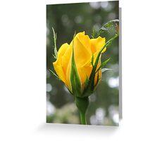 """Radiant Perfume"" Rosebud Greeting Card"