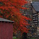 Autumn Splendor by Mary Fox