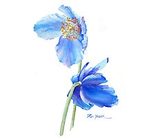 Blue Poppy Sails in the Wind Photographic Print