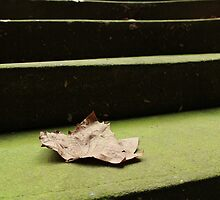 Green Stairs - 3 by Terry Rodger Smith