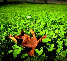 Leaf on clover by Terry Rodger Smith