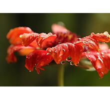 Luscious Drops Photographic Print