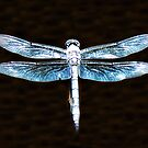 Blue Dragonfly Glitter by Sharon Woerner