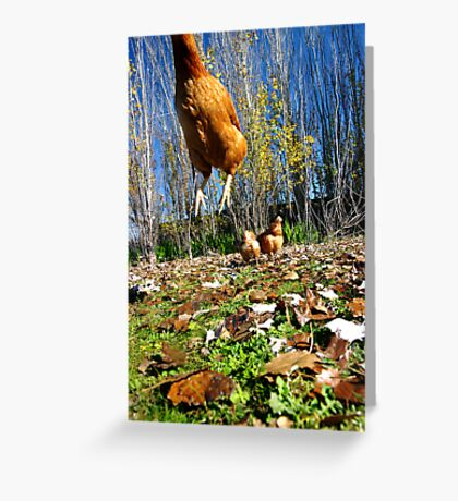 Jumping for Joy XXXIX Greeting Card