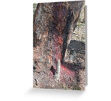 Corymbia Terminalis, Desert Bloodwood and termite nest Greeting Card