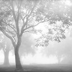 Trees in the mist by Pauline Roupski