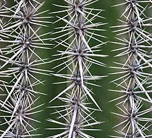 Cactus by VincenzoL