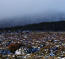 Alpine region, Mount Field National Park by Traffordphotos