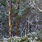 Snow in the bush by Traffordphotos