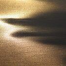last light. bicheno, tasmania by tim buckley | bodhiimages
