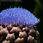 Artichoke blossom by Celeste Mookherjee