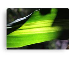 Sun shining through leaf - 3 Canvas Print