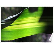 Sun shining through leaf - 3 Poster