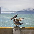Pelican, San Francisco by Philip Kearney