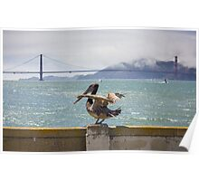 Pelican, San Francisco Poster
