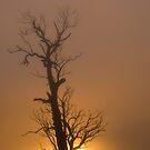 Golden Fog # 2 by GailD