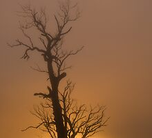 Golden Fog # 2 by GailD