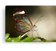 Glasswinged tropical butterfly Canvas Print