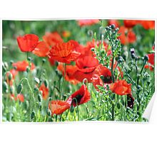 """""""Poppies Woldgate"""" Poster"""
