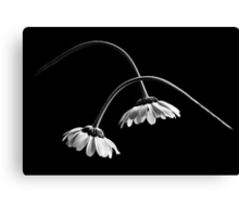 Drooping Canvas Print