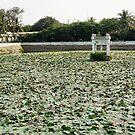 Lots of little lotus leaves by Marjolein Katsma