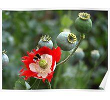 Last Flower Poster