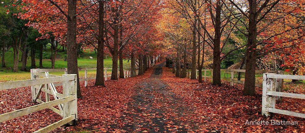 Autumn Lane by Annette Blattman