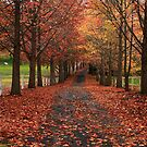 Autumn Lane by Annette Blattman