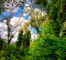 Overgrown Woodland Path by Vicki Field