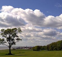 """Lone Tree - Sewerby Heads"" by Merice Ewart Marshall - LFA"