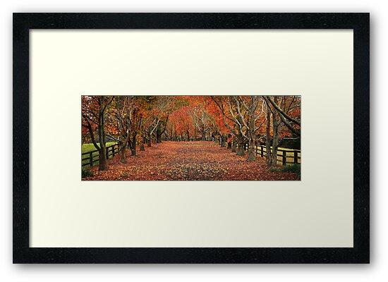 Autumn Drive by Annette Blattman