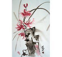 Chinese rose Photographic Print
