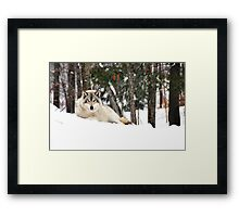I am watching you - Timber Wolf Framed Print