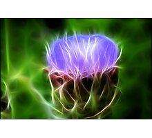Artichoke Flower: Fractalius Photographic Print
