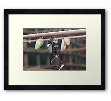 Coming out to play Framed Print