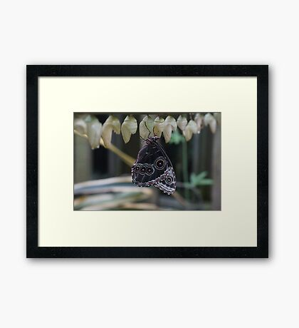 Just Emerging Framed Print