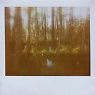 hidden places by Jill Auville