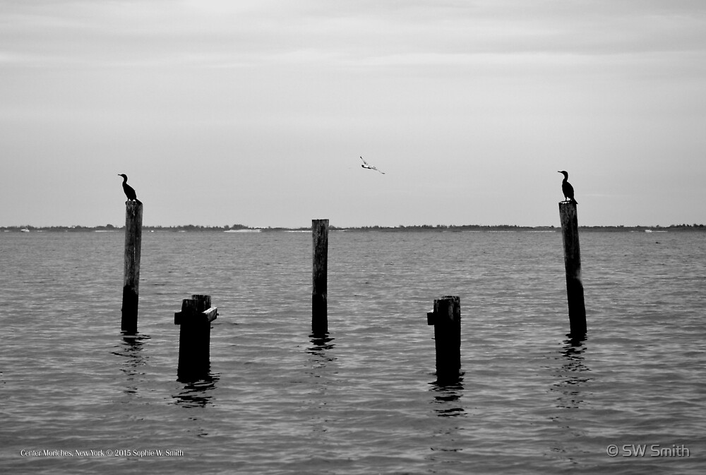 Double-Crested Cormorants & Seagull | Center Moriches, New York  by © Sophie W. Smith