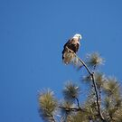 An eagle's eye view. by Amanda Huggins