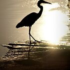Great Blue Heron-iPhone by onyonet photo studios