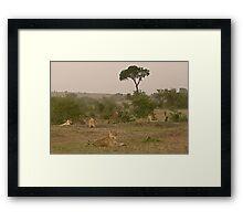 Seven Lions - Sieben Löwen Framed Print