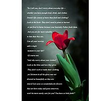 Matthew 6:25-30 Photographic Print