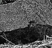 Wood Pile Stump in Black by noriesworld