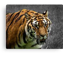 Tiger, tiger burning bright... Canvas Print