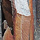 Wood Pile Wood IV by noriesworld