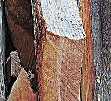 Wood Pile Wood IV by noriesworld