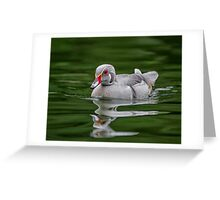 Silver Wood Duck Greeting Card